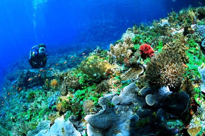 Wisata Menyelam yang Menakjubkan, Taman Laut Sulawesi